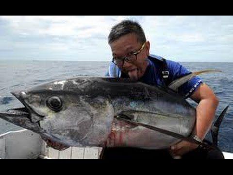 Mancing Dapat  Ribuan Ikan Raksasa