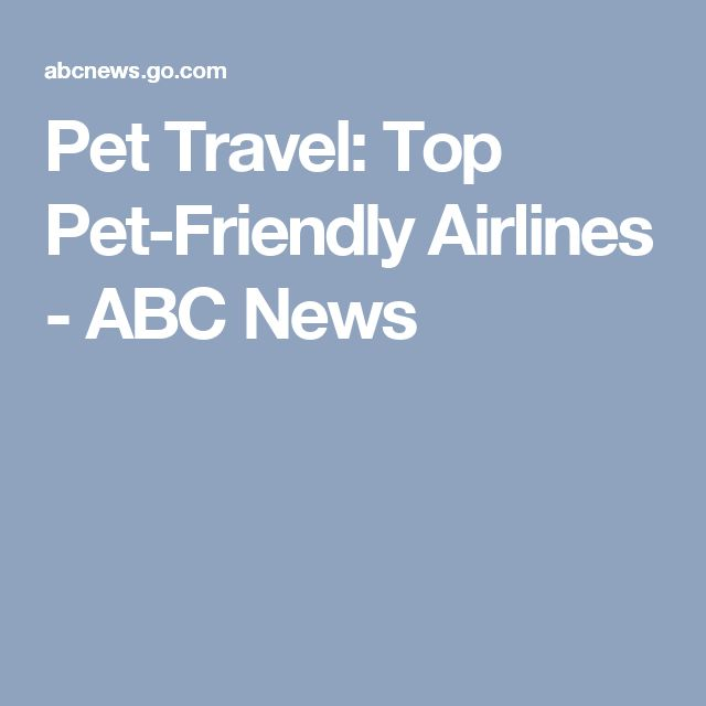 Pet Travel: Top Pet-Friendly Airlines - ABC News