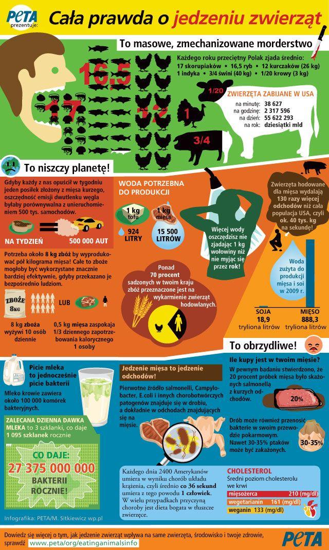 Cała prawda o jedzeniu zwierząt - Infografika - WP.Pl
