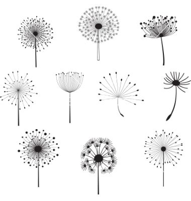 Floral elements with dandelions for design vector …