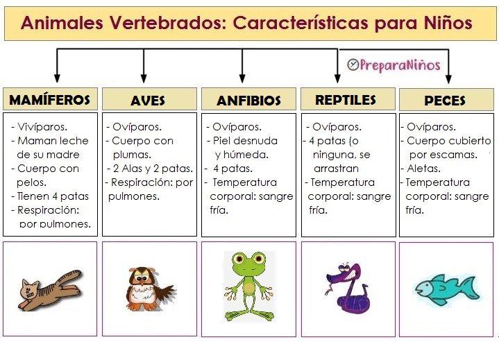 Animales Vertebrados Características Vertebrados E Invertebrados Animales Vertebrados Caracteristicas De Los Animales