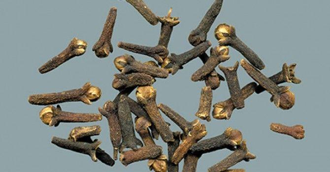 Asya ve güney Amerika'nın tropik bölgelerinde yetişen karanfil, Asya ülkeleri başta olmak üzere pek çok ülkede  çeşitli hastalıklarda  tedavi yöntemi olarak kullanılıyor. Karanfilin faydaları söyle: http://www.haberci.org/index.php?do=haber&id=5259