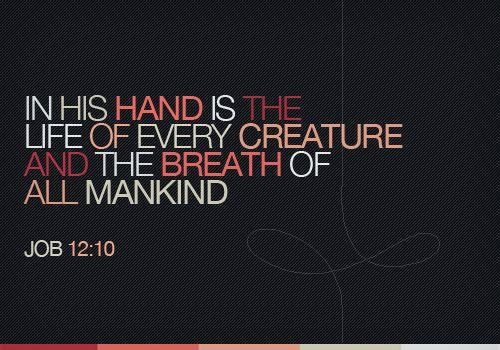 Job 12:10: Life, Quotes, Faith, Hands, Beautiful, Scripture, Bible Verses, Gods Hand, Job 12 10
