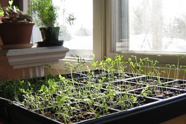 Les 230 meilleures images propos de jardin et potager for Ou trouver de la terre de jardin