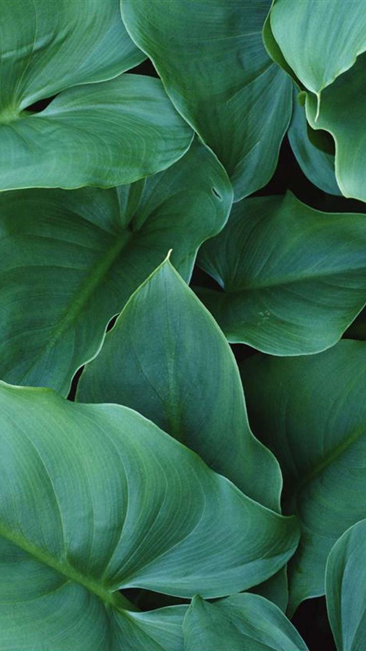 In the upper left corner you can find the highest quality backgrounds that have been viewed by many visitors and that have the best rating. Pin by Samantha Keller on ..1 | Green aesthetic, Plant