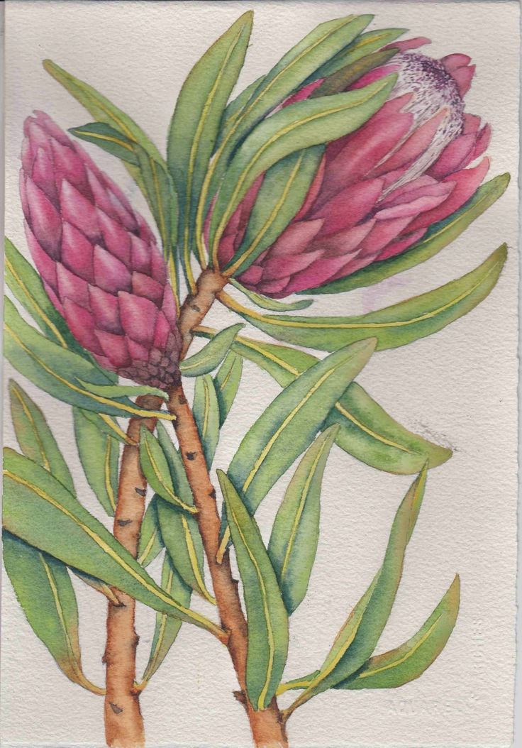 Proteas study. Before painting the background.