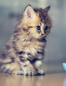 La minute chaton du jour : se faire livrer un chaton à câliner pendant sa pause déjeuner