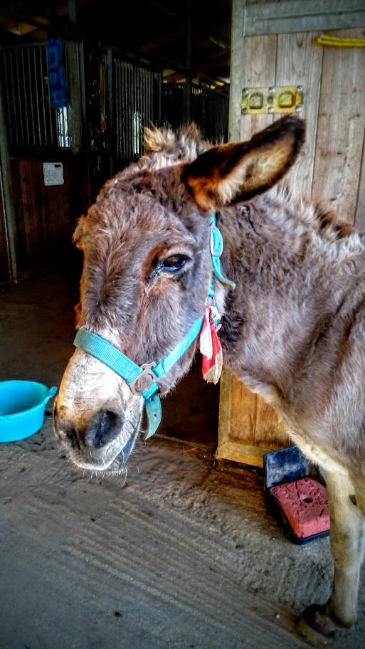 Hancy from Corfu Donkey Rescue