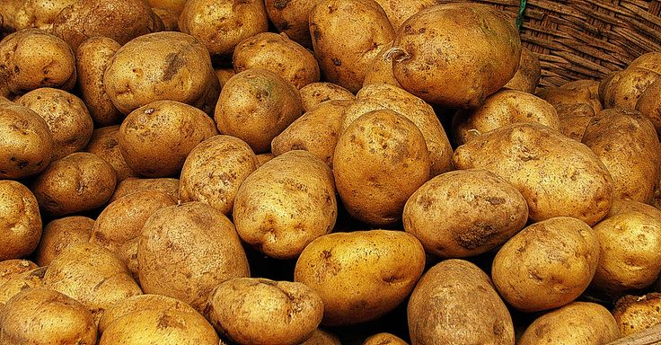 Grow Hundred Pounds of Potatoes in a Barrel Easily