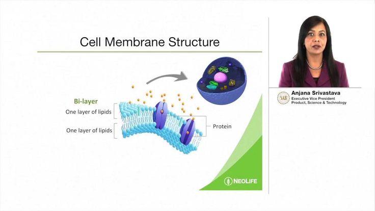 The importance of Cellular Nutrition by Anjana Srivastava