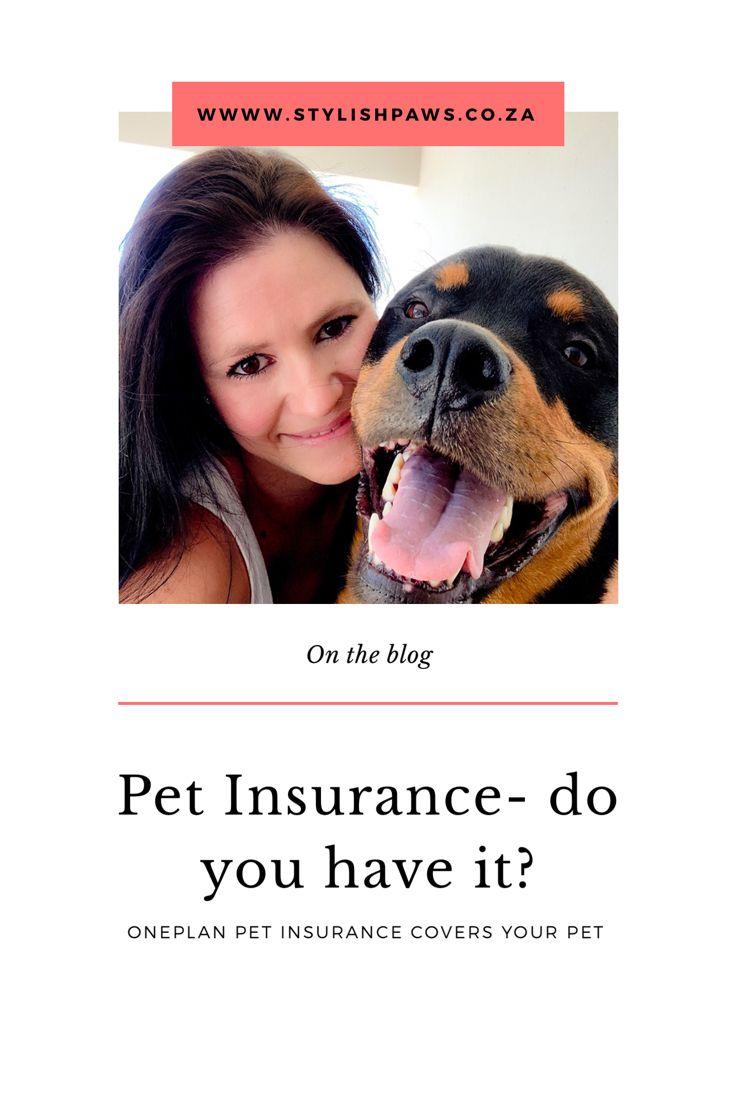 Oneplan Pet Insurance Stylish Paws Pet Insurance Pets Dog Blog