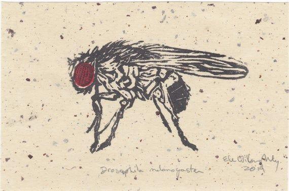Fruit Fly Drosophila Melanogaster Mini Lino Block Print Linocut