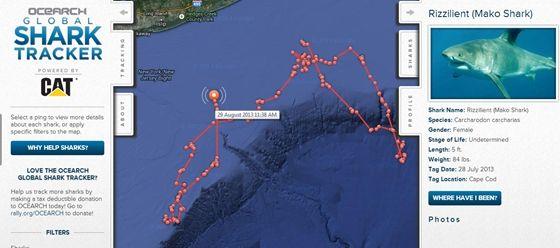 (1) Tech: Valós időben követheti nyomon, merre járnak a rettegett cápák - HVG.hu
