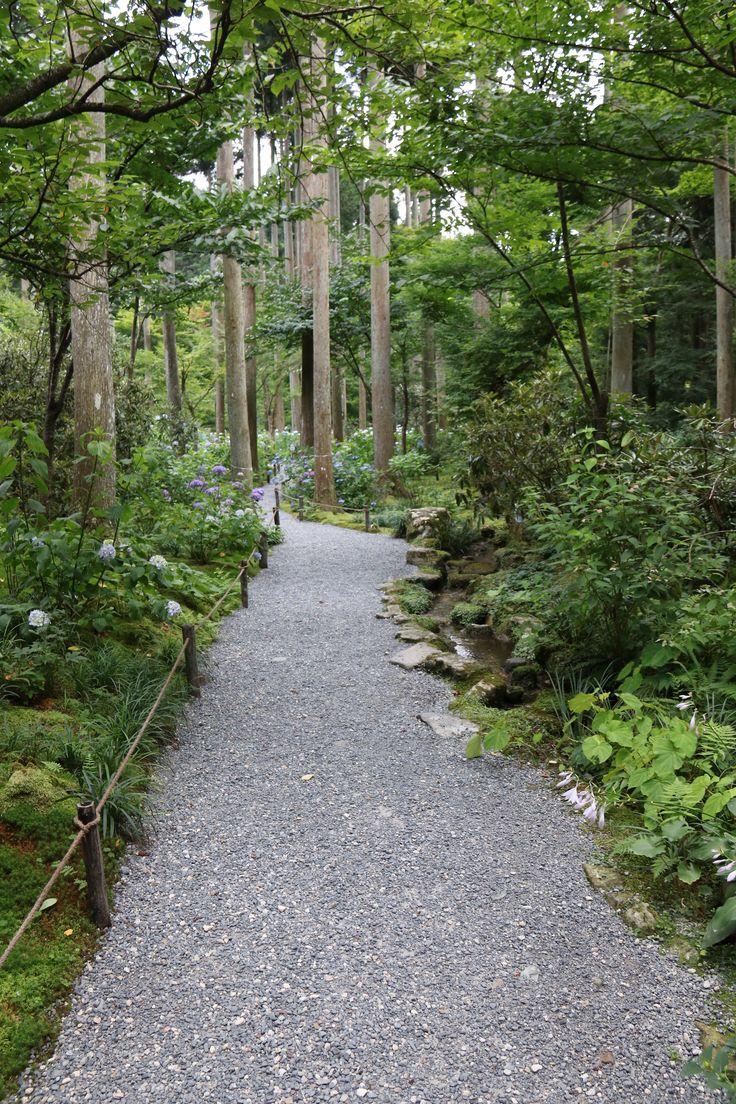 The hydrangea garden of Sanzen-in, Japan.