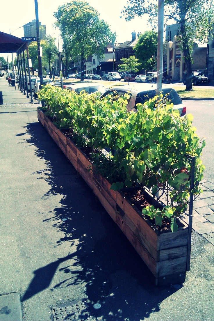 Urban Growth: Vines at Victor's on Drummond Street, Carlton