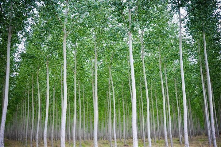 Ферма по выращиванию деревьев Эта ферма находится в штате Орегон, США и занимается она выращиванием деревьев. Она занимает площадь 10100 гектаров и является крупнейшей в своем роде.Ферма по выра...