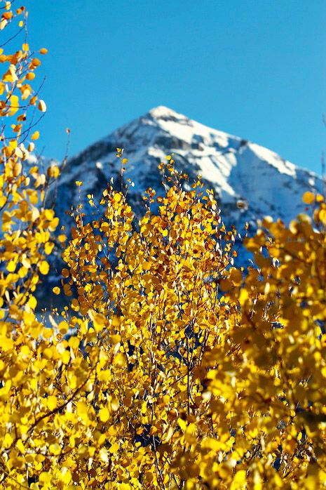 Telluride, Colorado in the Fall. Snow capped mountain. Yellow Aspen leaves. #nature #photography #travel