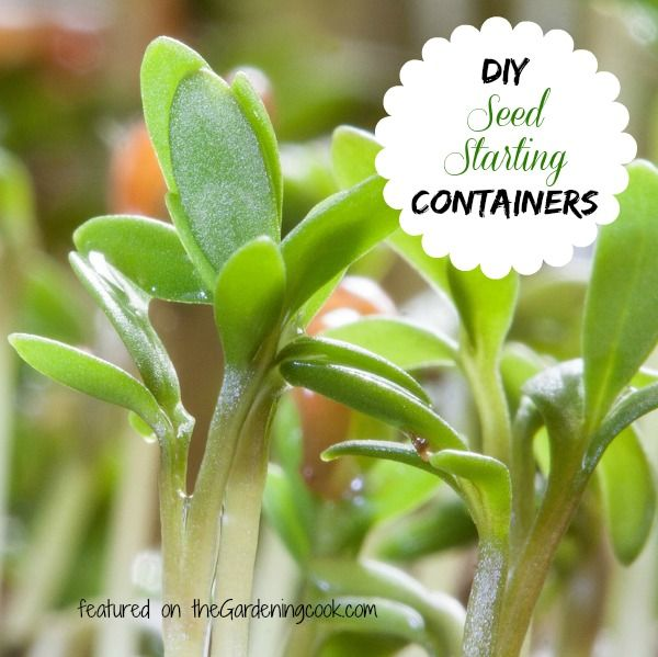 There are so many household items that you can recycle to use as seed starters. Most are very inexpensive to use and would be great to get kids interested in gardening.