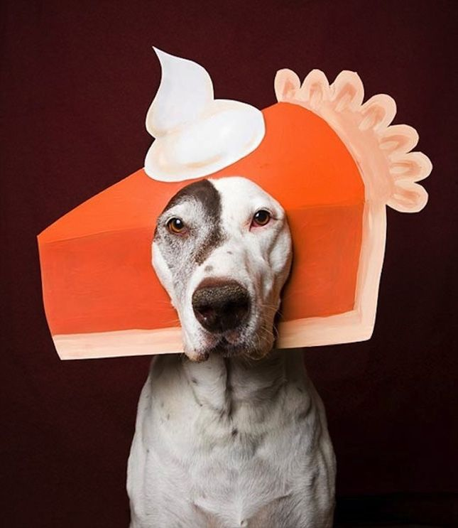 100 Genius Pet Costumes for Halloween & 84 best Fall Howloween and Thanksgiving images on Pinterest ...