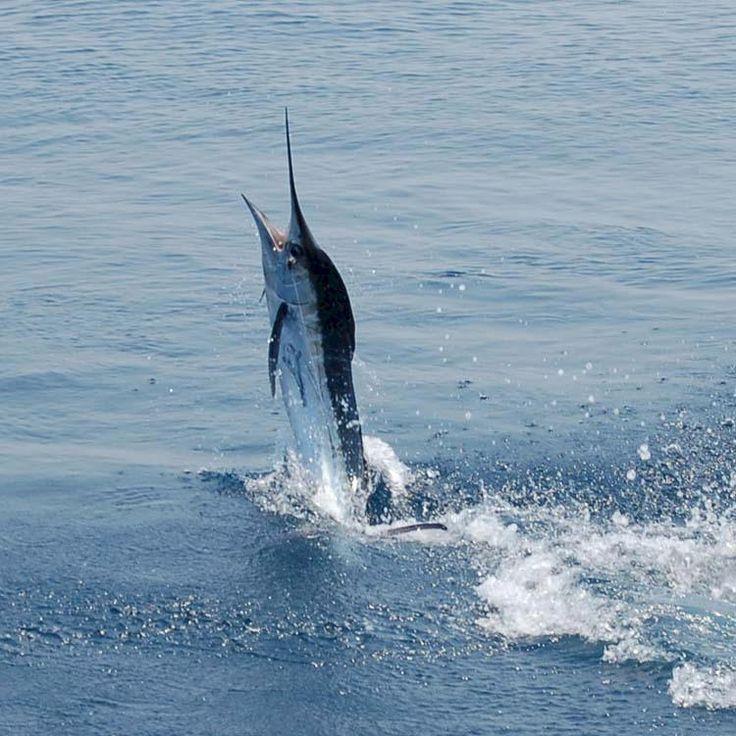 9 best ocean city md images on pinterest ocean city md for Deep sea fishing atlantic city