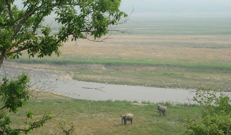 Explore wildlife near Sonanadi River in Jim #Corbett National Park located in Nainital, #Uttarakhand.