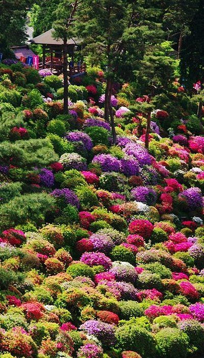 Azalea bushes at Shiofune Kannon Temple, Tokyo, Japan.  Amazing mix of colours.
