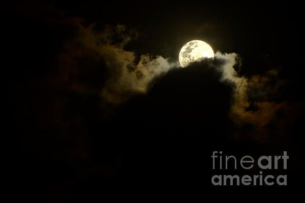 #SHY #MOON #RISING by #Kaye #Menner #Photography Quality Prints Cards and more at: http://kaye-menner.artistwebsites.com/featured/shy-moon-rising-by-kaye-menner-kaye-menner.html