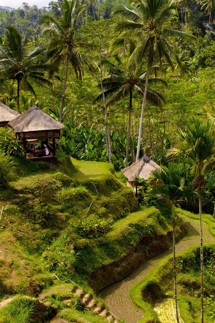 Get lost in the working rice paddies that surround the retreat. Plataran Ubud Hotel & Spa (Ubud, Indonesia) - Jetsetter