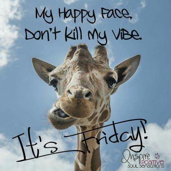 Its Friday Funny Quotations: 167 Best THANK GOD, IT'S FRIDAY!! Images On Pinterest
