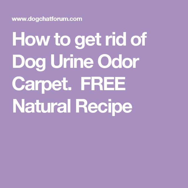 How to get rid of Dog Urine Odor Carpet.  FREE Natural Recipe
