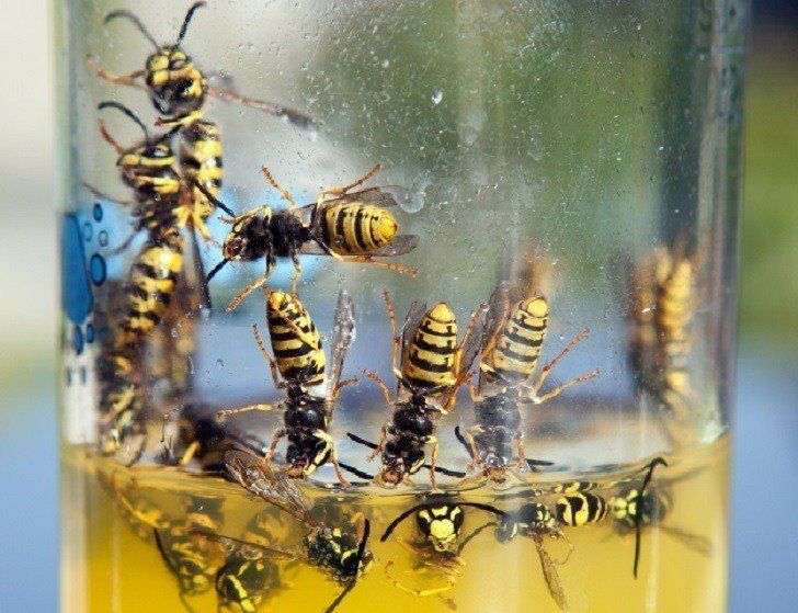 8 genius ways to get rid of wasps keep them away get