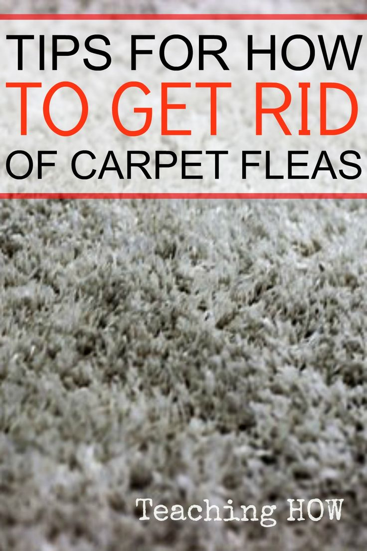 296 Best Pest Control Images On Pinterest Cleaning Ants
