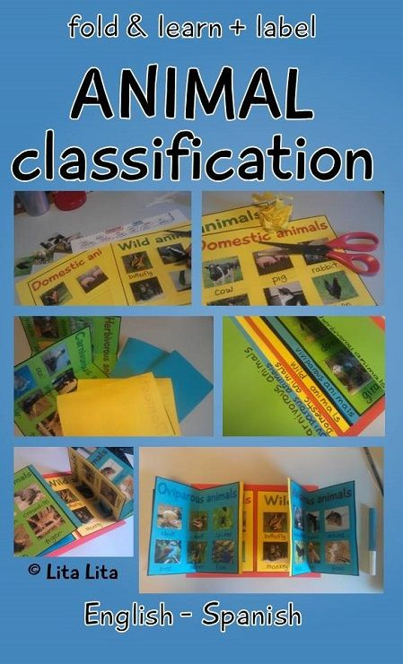 Animal classification foldable. Includes label worksheets and cards