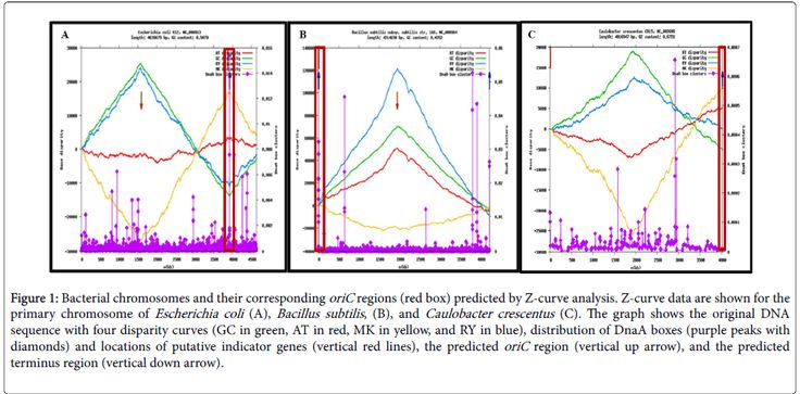 Characterization of Replication Origins of Multiple Chromosomes in Rhodobacter Sphaeroides