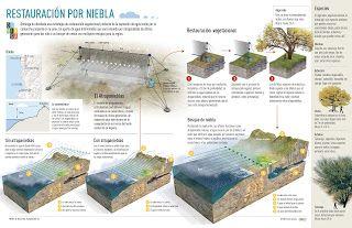 Riparium Perú | Paisajismo Acuático - Aquascaping: Los Atrapanieblas