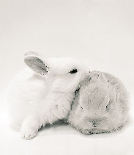 bunnies love ~ want one so baaad