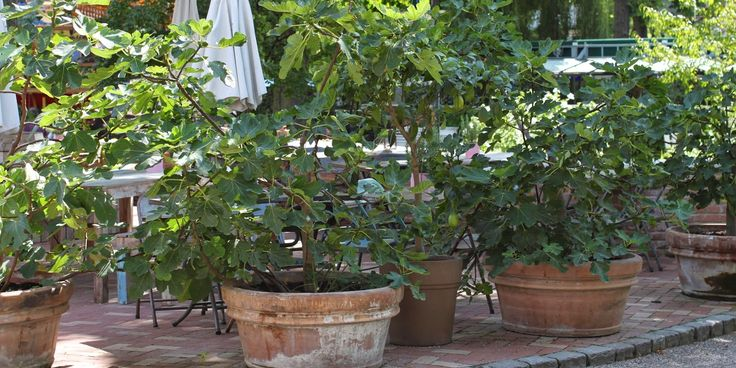 IT'S A WRAP - garden pots and winter protection