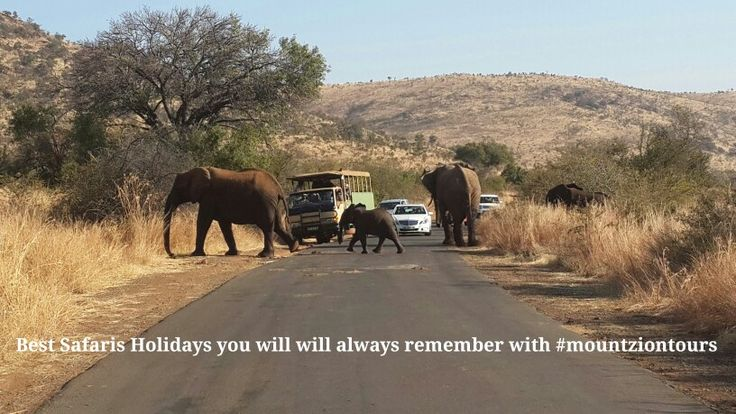South Africa Best Safaris