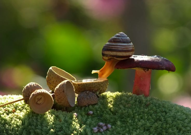 """This shot of a snail sipping water from an acorn, entitled """"Hot Day"""", was captured by photographer Vyacheslav Mishchenko."""