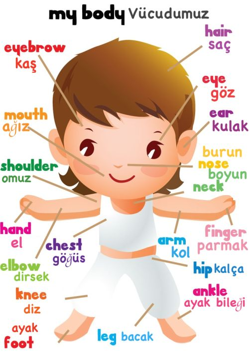 Turkish and English terms for the body