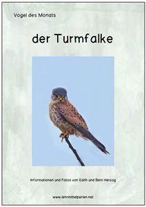 Vogel des Monats: Turmfalke