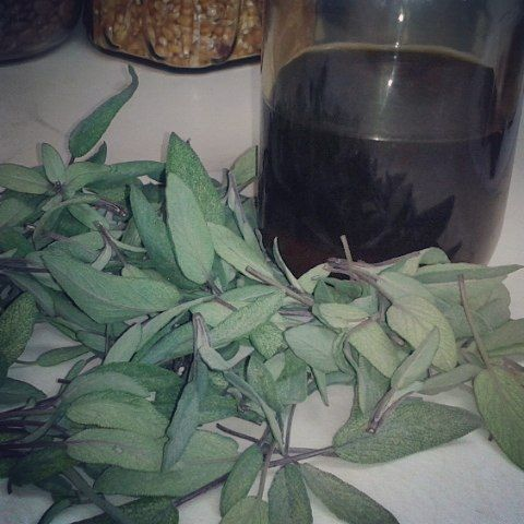 Making Sage Infused Honey. This is a great remedy for scratchy throat caused by sinus discharge and excessive coughing. #myherbalstudies