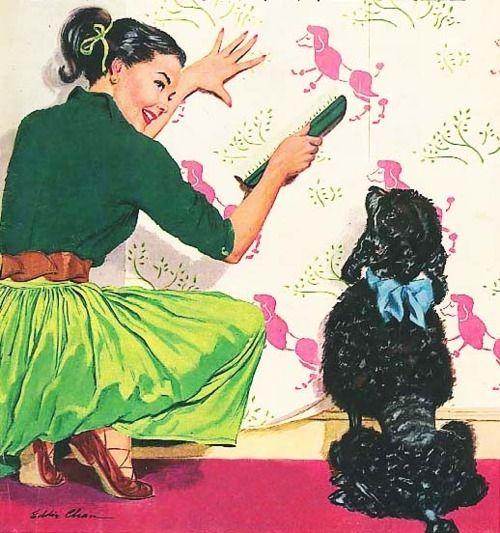 poodle, poodle wallpaper