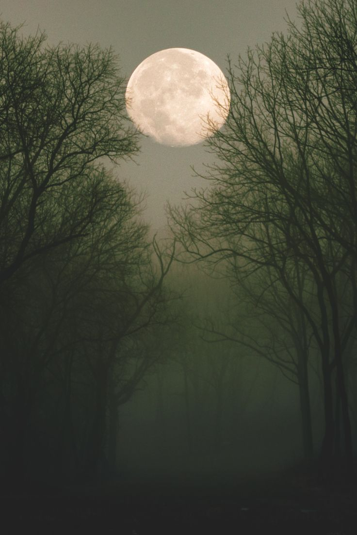Another month, another full moon. I'm sitting under a tree thinking about how nice it would be to be apart of a larger pack when I hear you walk up beside me.e