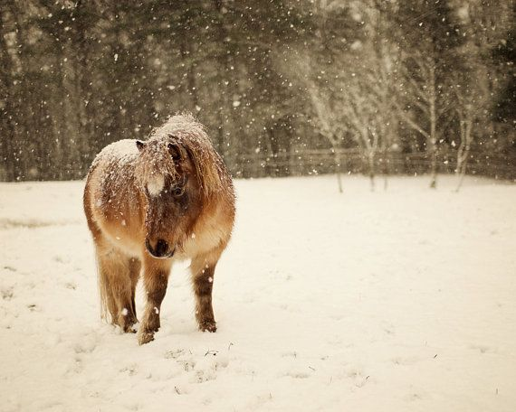 Miniature Horse in Snow Whimsical by Whimsicalphotocards on Etsy,