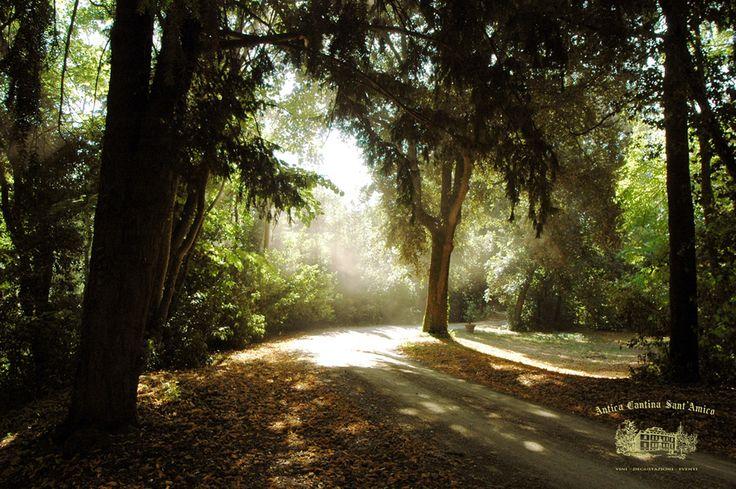 Parco storico - Tenuta Sant Amico