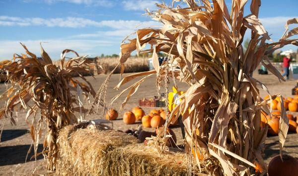 Pumpkin Patches etc in Denver area #Denver #pumpkinpatches