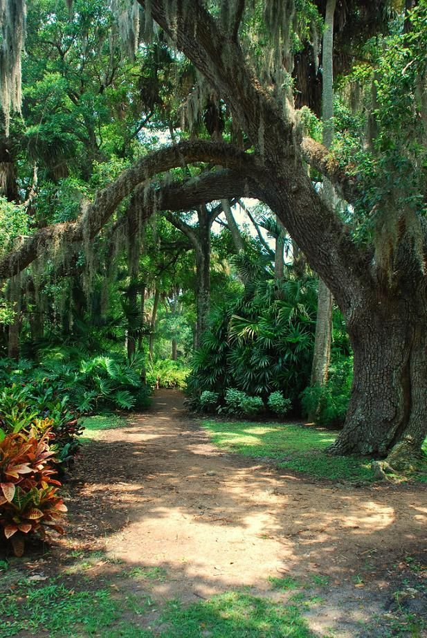 Love The Spanish Moss Southern Charm Pure Southern Sass Pinterest Spanish Moss Spanish
