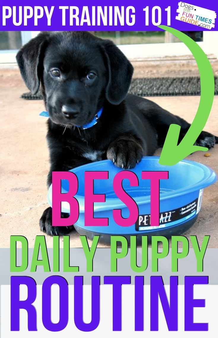 A Dog Routine For New Dog Owners Why How To Come Up With A Puppy Feeding Schedule And Potty Routine For Your Dog Puppy Feeding Schedule Puppies Cute Dog Collars