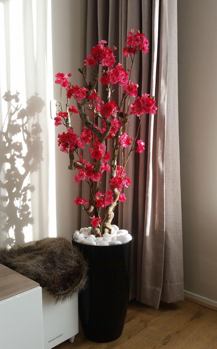 Fuchsia roze bloesemboom